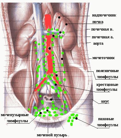 лимфоузлы брюшной полости