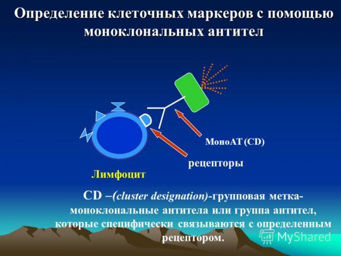 иммунотерапия рака за границей