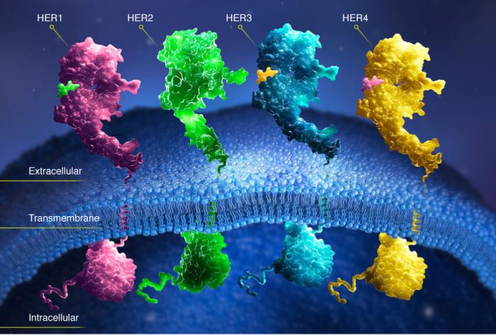 препараты иммунотерапии в онкологии